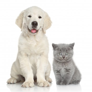 Cute dog and cat together