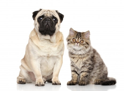 Cute Dog And Cat Staring Dogs Animals Categories