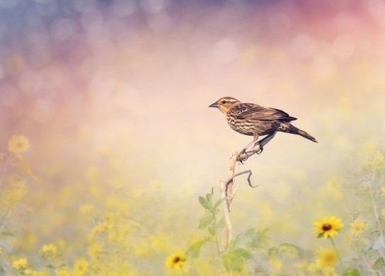 Brown Bird Perches on a Meadow