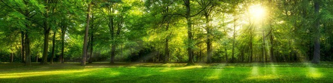 Beautiful panoramic sunny forest