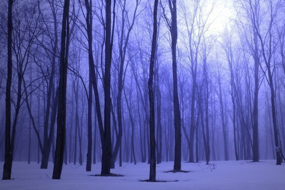 Foggy Blue Winter Forest