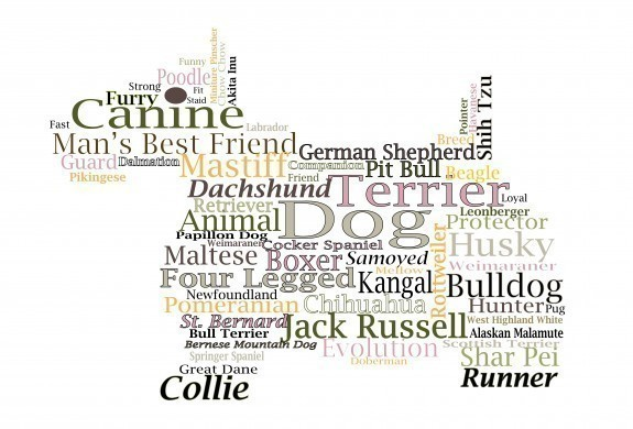 Dog word cloud illustration