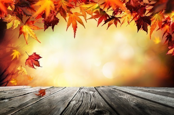 Autumn background with red leaves