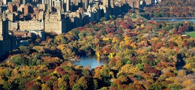 The aerial view of Central Park