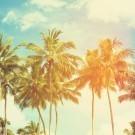 Palm trees at tropical coast
