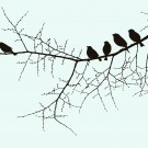 Birds on a twig illustration