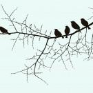 Birds on a twig illustration