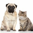 Cute dog and cat staring