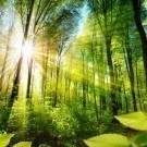 The forest bathed in sun