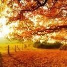 Panoramic Autumn