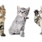 Kittens with paw up