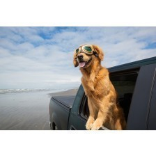 Dog Car Window