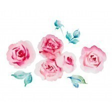 Pale pink roses watercolor illustration