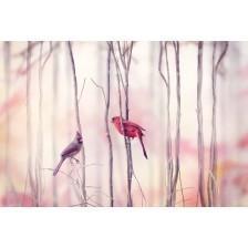 Northern Cardinal Birds