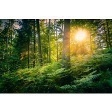 Palatinate Forest
