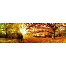 Panoramic Autumn