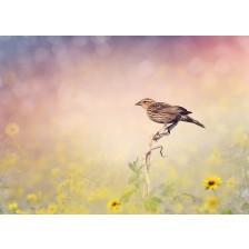 Brown Bird Perches on a Meadow