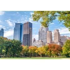 Foliage season in the Central Park