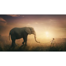 Elephant walked by child
