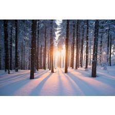 Sunset in the snowed trees