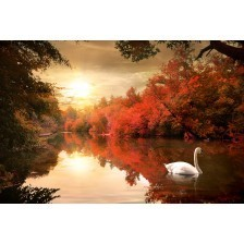 Swan in the autumn
