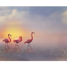 Flamingo Birds