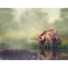 Brown Bear Near the Pond